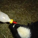 Riverslea_bottlefeeding