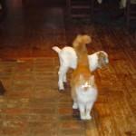 Riverslea_cats