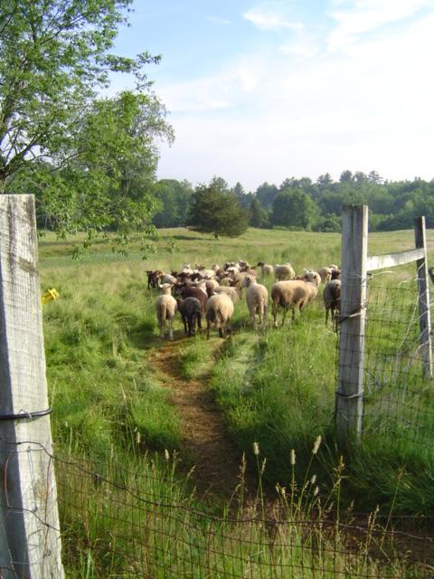 Riverslea_herd