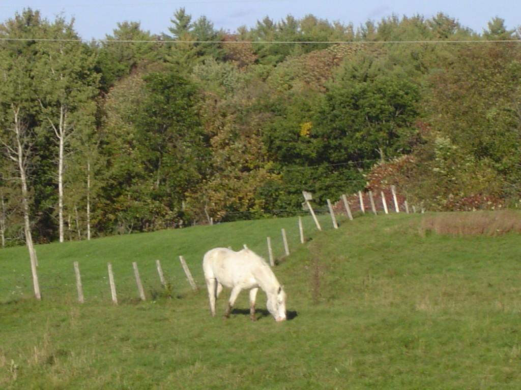 Riverslea_horse