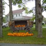 Riverslea_pumpkins