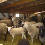 Riverslea_sheepbarn